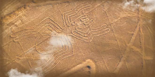 linea nazca tarantula